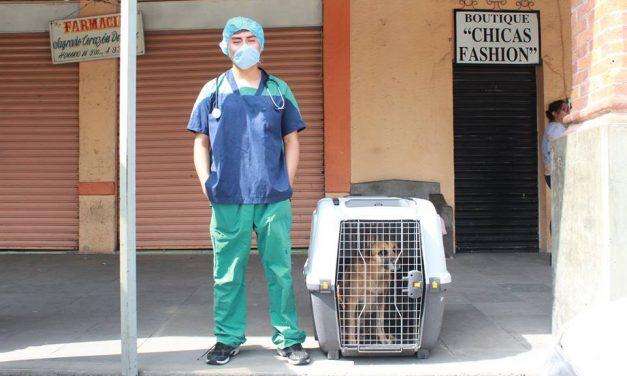 Inicia campaña de esterilización en Villa de Tezontepec