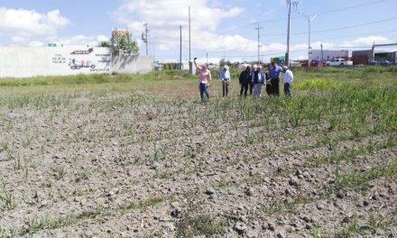 Sequía afecta sembradíos de maíz y cebada en Tulancingo