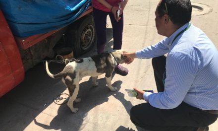 Hasta 2 mil pesos de multa por maltrato animal en Tulancingo