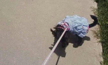 Sacan a estudiante de la UAEH por llevar a su perrita