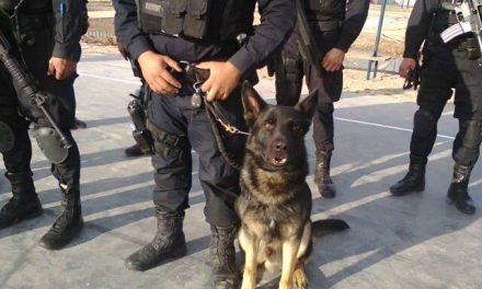 Con perros y drones buscan a los desaparecidos en Huichapan