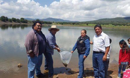 Realizan siembra de carpa en Zapotlán