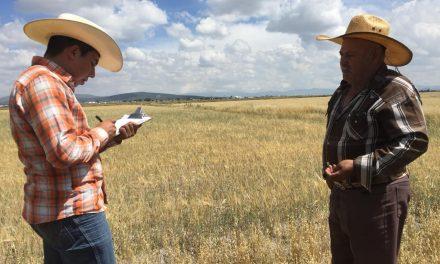 Reportan afectaciones a cultivos por sequía en Tolcayuca