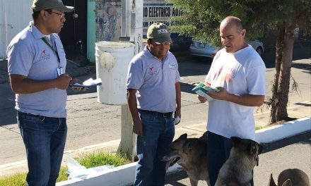 Indispensable fomentar la adopción de perros de callejeros