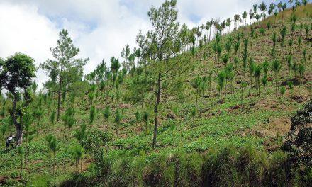 Reforestan zonas boscosas de Santiago Tulantepec