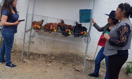 Entregan paquetes para autoconsumo en Santiago Tulantepec