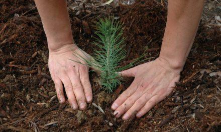 Plantan 2 mil árboles en Epazoyucan