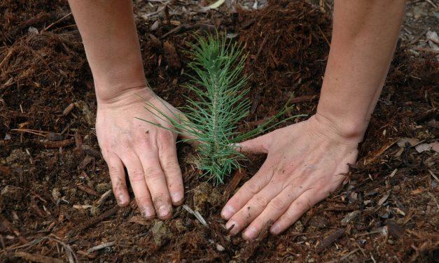 El Estado deberá promover estrategias forestales sustentables