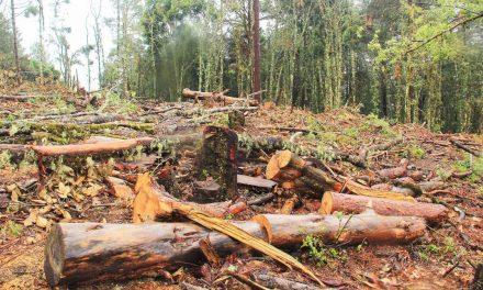 Se agudiza tala clandestina en los municipios más pobres de Hidalgo