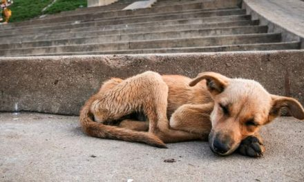 Ciudadanos respaldan reglamento de Pachuca contra maltrato animal