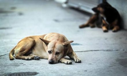 Publican en Diario Oficial Reglamento para Protección Animal
