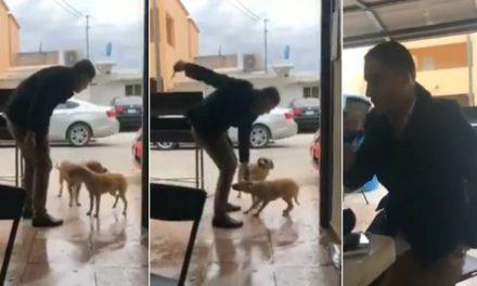 Procederán legalmente contra hombre que agredió a un perro en Piedras Negras