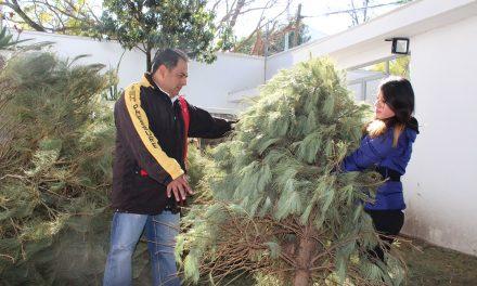 Implementan campaña de acopio de árboles de navidad en Tulancingo
