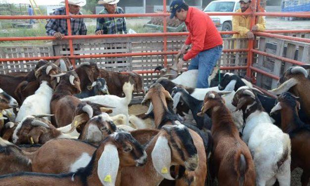 Brindan apoyo a los productores pecuarios de Zapotlán de Juárez