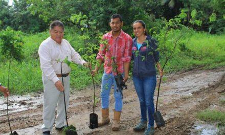 Inician campaña de reforestación con la venta de árboles frutales