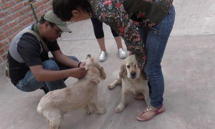 Atención a maltrato animal prioridad para el Gobierno de Tulancingo