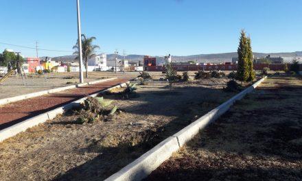 Denuncian tala ilegal de magueyes en San Fernando, MR
