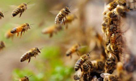 Pide legislador de Morena cuidado de abejas en el estado