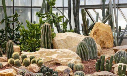 Buscan apoyo del gobierno estatal para consolidar el Primer Jardín Botánico