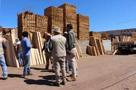 Clausuran aserradero y decomisan madera