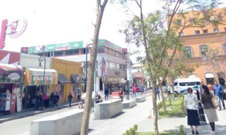 Realizan censo arbóreo en Tulancingo para garantizar su cuidado