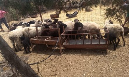 Recuperan ganado presuntamente robado en Apan