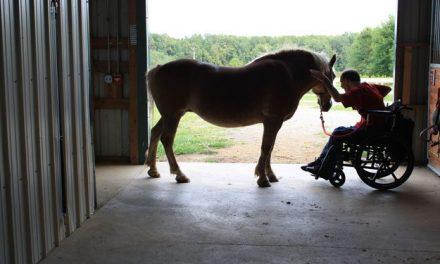 UPP prepara caballos para equinoterapias