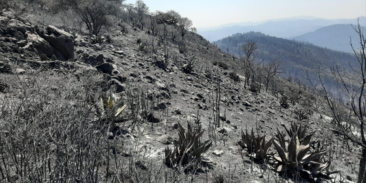 Incendio forestal de Pachuca consumió 70 hectáreas