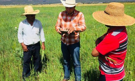 Por cultivos siniestrados productores de Tolcayuca reciben apoyo de seguro