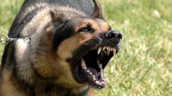 Sancionarán a dueños de mascotas peligrosas que no atiendan medidas de seguridad