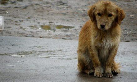 Piden endurecer castigos para quienes abandonen perros