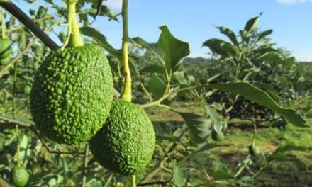 Detectan fallas en implementación de sistemas agroforestales en la Huasteca y la Otomí – Tepehua