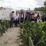 Cultivo del nopal, una alternativa para erradicar la pobreza