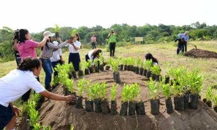 Realizarán jornada de reforestación en la zona de Tula-Tepeji