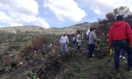 Reforestan zona afectada por incendio en cerro de Camelia