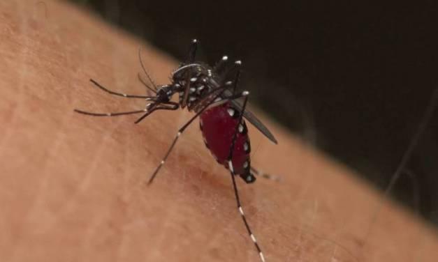 Lluvia y calor han acelerado casos de dengue en la entidad