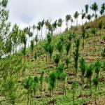 Hidalgo ya cuenta con Estrategia para la Conservación y Uso Sustentable de la Biodiversidad