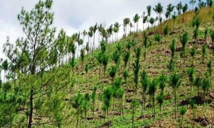 Capacitación para reforestar, proponen ciudadanos