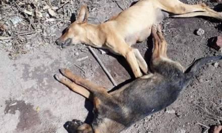 Envenenan a perros en comunidad de Zapotlán