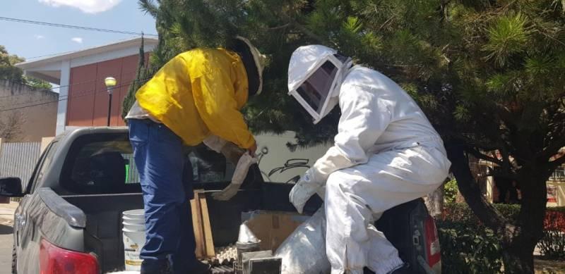 Rescatan en Tulancingo 60 enjambres de abejas