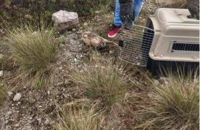 Profepa reintegra a tres ejemplares de vida silvestre a su hábitat natural