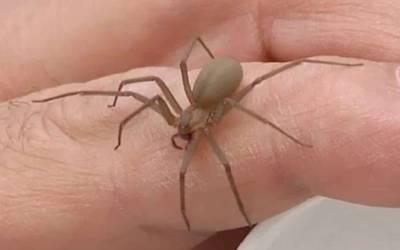 Alertan sobre mordeduras de serpientes y arañas, en Hidalgo van 374 casos