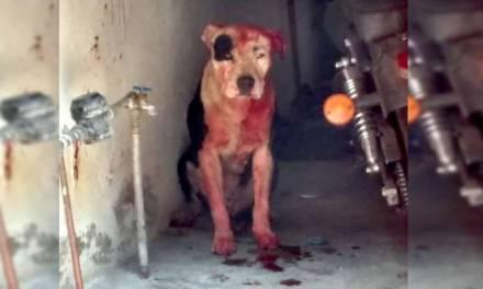 Perro pitbull mata a bebé, en Iztapalapa