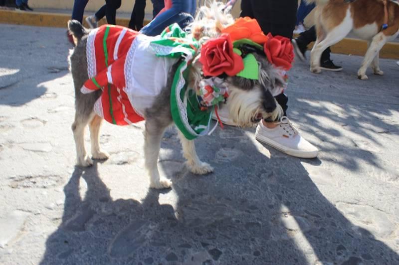 Celebran en Villa de Tezontepec el Día del Perro Callejero