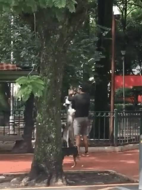 Graban a cuidador de perros asfixiando a un husky