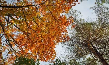 Este lunes inició el otoño en el hemisferio norte
