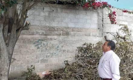 Denuncian poda de árboles sin permiso en Tulancingo