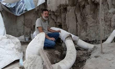 Hallan restos de 14 mamuts en Tultepec, era una trampa