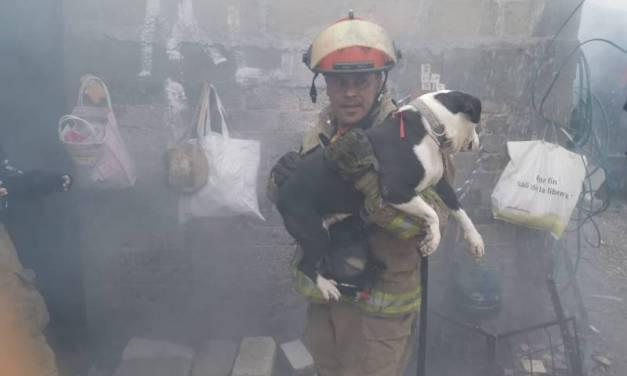 Bomberos rescatan a dos perros en incendio de vivienda