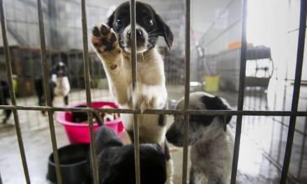 Cierran dos albergues de perros callejeros en Tulancingo